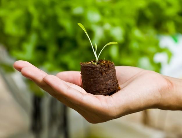 วิธีจัดการกับเมล็ดพันธุ์พืช ให้อยู่รอดก่อนกลายเป็นต้นไม้ที่แข็งแรง