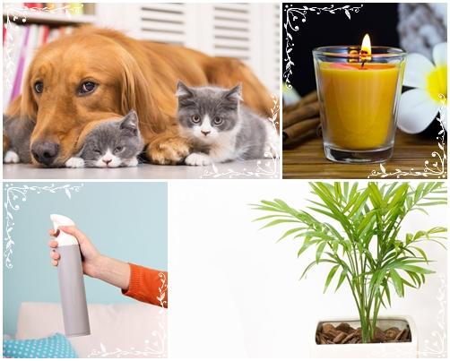 5 สิ่งภายในบ้าน ที่อาจจะทำให้เกิดอาการ คัน ได้หากไม่ทำความสะอาด