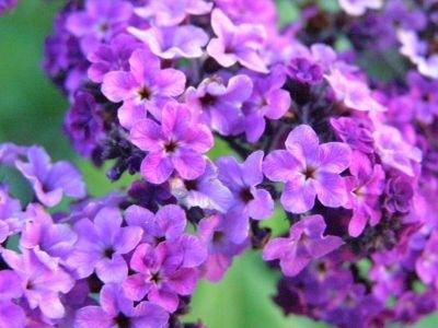คุณเครียดหรือไม่? ลดความเคลียดด้วยการบำบัดจากกลิ่นหอมของดอกไม้ได้ 3