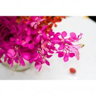 GL 24X36 FLOWERY 021 PM